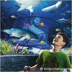 foto sea life blankenberge